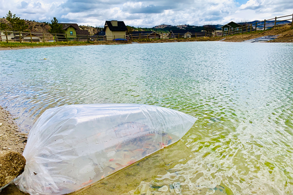 Kio-in-Pond-with-bag